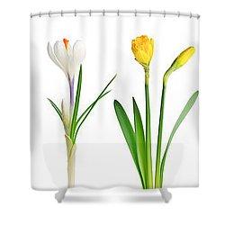 Spring Flowers  Shower Curtain by Elena Elisseeva