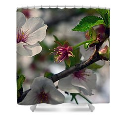 Shower Curtain featuring the photograph Spring Forth by Larry Bishop