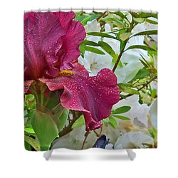 Spring Glow Shower Curtain by Larry Bishop