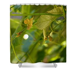 Spring Green Grape Vines Shower Curtain by Adria Trail