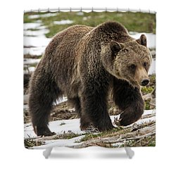 Shower Curtain featuring the photograph Spring Grizzly Bear by Jack Bell