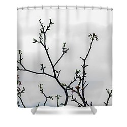 Spring Growth Shower Curtain