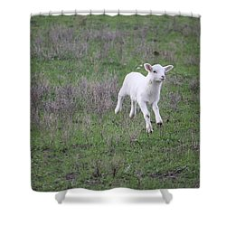 Spring Has Sprung Shower Curtain by Donna  Smith