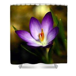 Spring Has Sprung Shower Curtain by Karol Livote