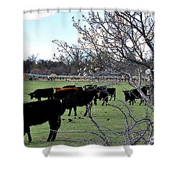 Spring In The Hay Meadow Shower Curtain