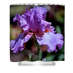 Spring Iris Bloom Shower Curtain