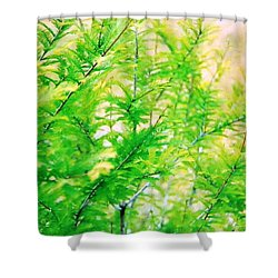 Spring Cypress Beauty Shower Curtain