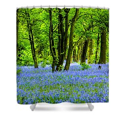 Spring Is Here Shower Curtain by Brian Roscorla