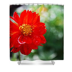 Spring Is In The Air Shower Curtain by Becky Furgason