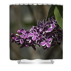 Shower Curtain featuring the photograph Spring Lilac by Elsa Marie Santoro
