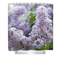 Spring Lilacs In Bloom Shower Curtain by Juli Scalzi