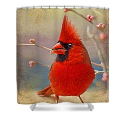 Spring Male Norther Cardinal Shower Curtain