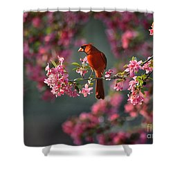 Spring Morning Cardinal Shower Curtain