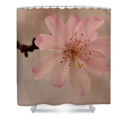 Shower Curtain featuring the photograph Spring Pink by Larry Bishop