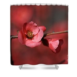 Spring Richness - Flowering Quince Shower Curtain by Joy Watson