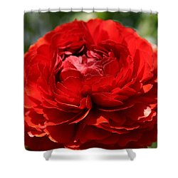 Spring Scarlet Double Begonia Shower Curtain