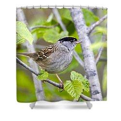 Spring Scene Shower Curtain