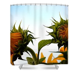 Spring Sun Shine Shower Curtain by Gregory Merlin Brown
