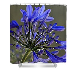 Spring Time Blues Shower Curtain by Menachem Ganon