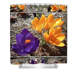 Spring Time Crocuses Shower Curtain by Patricia Keller