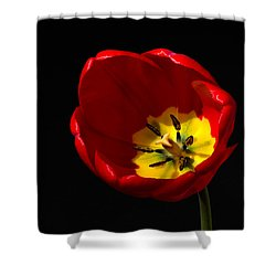 Spring Tulip 2 Shower Curtain by Kenneth Cole