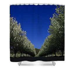 Spring Tunnel Shower Curtain by Raymond Salani III