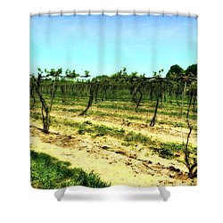 Spring Vineyard Ll Shower Curtain by Michelle Calkins