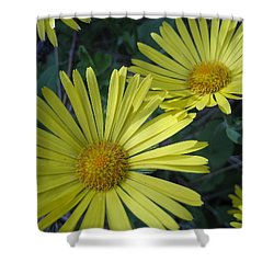 Shower Curtain featuring the photograph Spring Yellow  by Cheryl Hoyle
