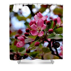 Spring1 Shower Curtain