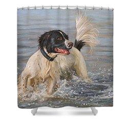 Springer Spaniel Shower Curtain by David Stribbling