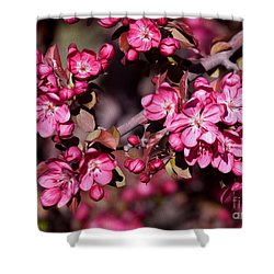Shower Curtain featuring the photograph Spring's Arrival by Roselynne Broussard