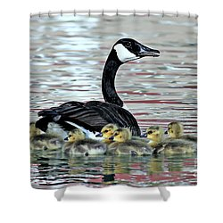Spring's First Goslings Shower Curtain