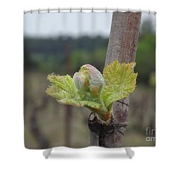 Spring In The Vineyard Shower Curtain by France  Art