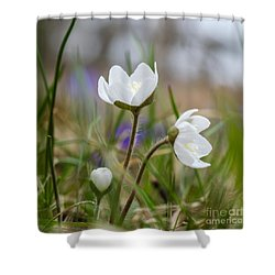 Springtime Blossom Shower Curtain