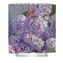 Springtime Lilacs Shower Curtain