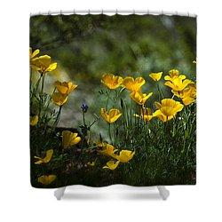 Springtime Poppies  Shower Curtain by Saija  Lehtonen