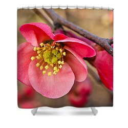 Springtime Quince Shower Curtain by Julie Andel