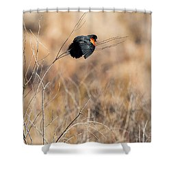 Springtime Song Square Shower Curtain