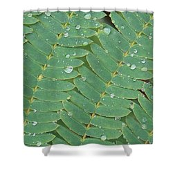 Shower Curtain featuring the photograph Singing In The Rain by John Glass