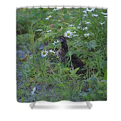 Shower Curtain featuring the photograph Spruce Grouse by James Petersen