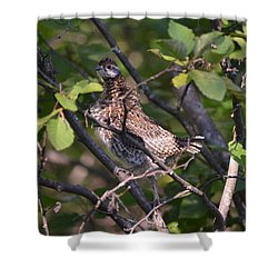 Shower Curtain featuring the photograph Spruce Grouse2 by James Petersen