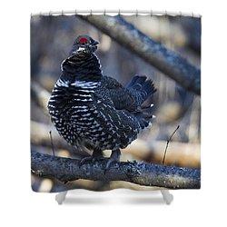 Spruce Hen Shower Curtain