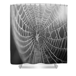 Spyder Web Shower Curtain