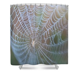 Spyder's Web Shower Curtain
