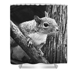 Squirrel Black And White Shower Curtain by Sandi OReilly