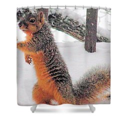 Shower Curtain featuring the photograph Squirrel Checking Out Seeds by Janette Boyd