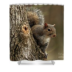 Squirrel Shower Curtain by Douglas Stucky