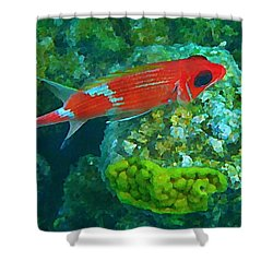 Squirrel Fish Shower Curtain by John Malone