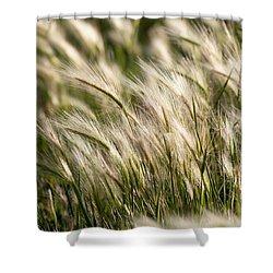 Squirrel Grass Shower Curtain