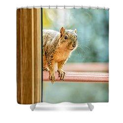 Squirrel In The Window Shower Curtain by LeeAnn McLaneGoetz McLaneGoetzStudioLLCcom